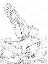 usa national eagle bald eagle coloring pages kids aim