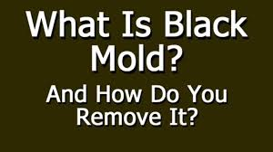 elegant what to do about black mold in on home design ideas with