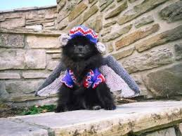 Flying Monkey Halloween Costume Halloween Costumes Pomeranian Puppies Dogs