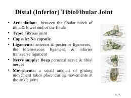Posterior Inferior Tibiofibular Ligament 210 Lower Limb Rs Updated