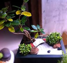 more entries for the great annual miniature garden contest the