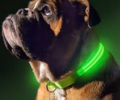 dog collar lights waterproof up dog collar