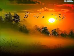 flight tag wallpapers flight trees bird sky full hd 1080p