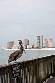 158 best gulf shores al my winter home images on pinterest