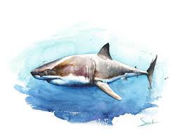 shark art etsy