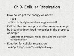 ch 9 cellular respiration