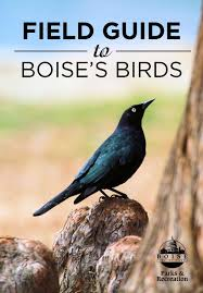 boise bird guide highlights local birds photographers boise