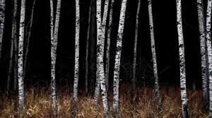 birch wood halloween background the trees creepy dark forest music youtube