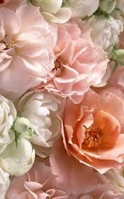 516 best flowers flores images on pinterest color schemes