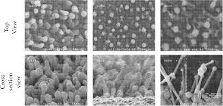 effect of argon carrieffect of argon carrier gas flux on tio2