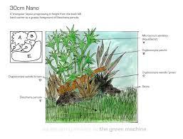 Nano Aquascaping Planting On A Budget A 30cm Nano Aquarium The Green Machine
