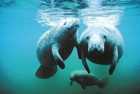 Los animales nos hablan (mensajes de distintas especies a los animal communicators) Images?q=tbn:ANd9GcQwcZqfFk9maXrwI2FWj6uMoWZ48sD-0Bp7BzktcyxsxEWTWms&t=1&usg=__IGGX1d58q8ND7R9fcqYXDRjZibM=