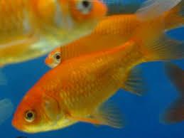 pesci alimentazione i pesci e l alimentazione