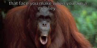 Monkey Face Meme - the monkey face quickmeme
