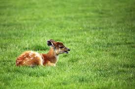free images grass lawn meadow prairie animal wildlife