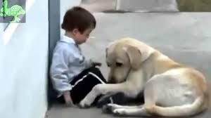 film kisah nyata yg mengharukan video kisah nyata cinta sedih mengharukan video kisah nyata anjing