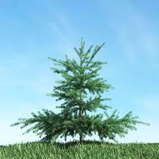 small pine tree 3d model cgtrader
