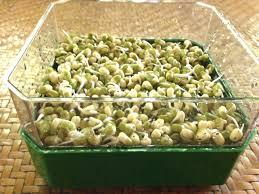 comment cuisiner les pousses de soja graines comment les faire germer et les cuisiner plus mince
