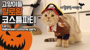the halloween special the cats are wearing a costume suri u0026noel