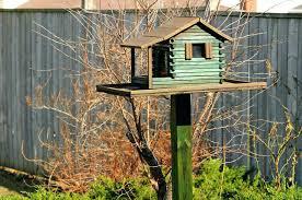 safflower seed for bird feeder window feeder attracts cardinals
