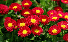 hd backgrounds u2013 wallpapers and pictures flowers hd for desktop