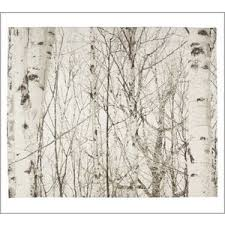birch tree organic duvet cover u0026 sham pottery barn polyvore