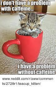 Aww Memes - 25 best memes about teacup kittens teacup kittens memes