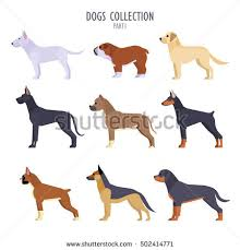 boxer dog breeders near me labrador stock images royalty free images u0026 vectors shutterstock