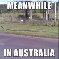 Straya Memes - straya meme by jake cavdo memedroid