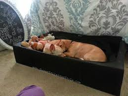 Homemade Dog Beds Diy Pet Bed Trundle Sugarstilettosstyle Youtube