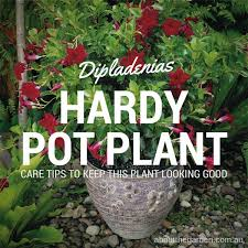 8 best grow now spring gardening in australia images on pinterest