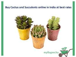 buy cactus and succulents in india at best rates