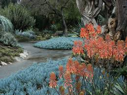 succulent landscaping los angeles outdoor succulent landscaping