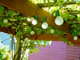 patiozen using vines in a patio space outsidemodern