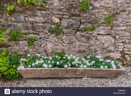 small white wildflowers in stone planter box against stone wall