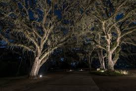 lighting large trees sidera landscape lighting