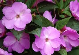 shade plants 10 plants that don u0027t need sun bob vila