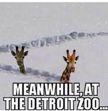 Michigan Memes - the best memes about winter in michigan