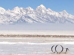 airbnb jackson hole wy long term rent national elk refuge in holding 4 miles from town of