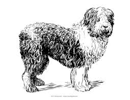 free coloring pages dog breeds periodic tables