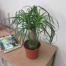 100 best indoor trees best indoor plants with low maintenance