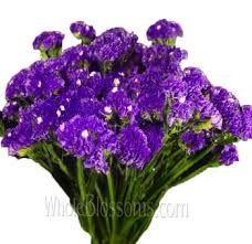statice flowers wholesale tissue culture statice blue purple flower