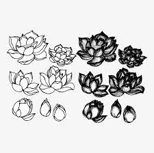 lotus sketches and drawings lotus sketch artwork png and vector
