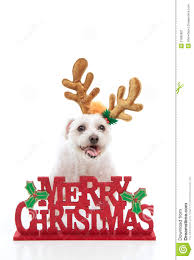 download merry christmas dog