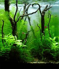 Aquascape Fish 930 Best Aquarium Fish Tank Aquascape Aquascaping Images On