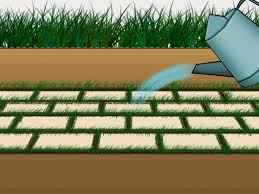 How To Level Ground For A Patio by How To Grow Grass Between Pavers 6 Steps With Pictures