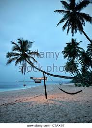 palm tree hammock beach scene stock photos u0026 palm tree hammock