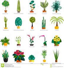 vector set of indoor tree home plants in pots illustration stock