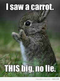 Funny Rabbit Memes - oh my gosh this is so cute like you don t even know cute