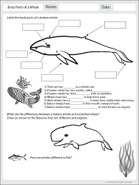body parts of a whale worksheet click to download science